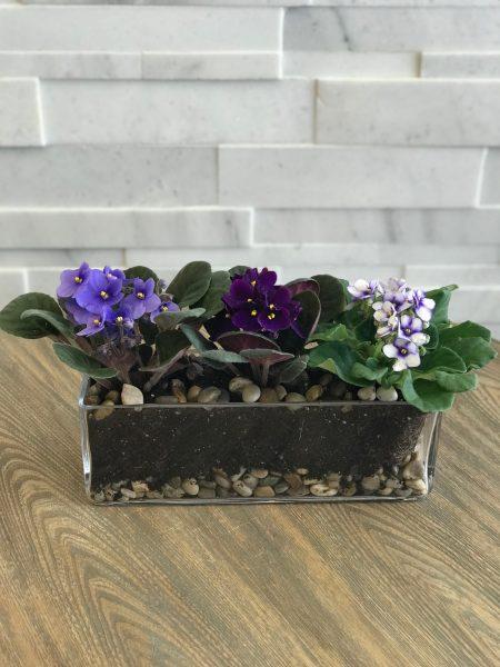 Violet Trio Plan